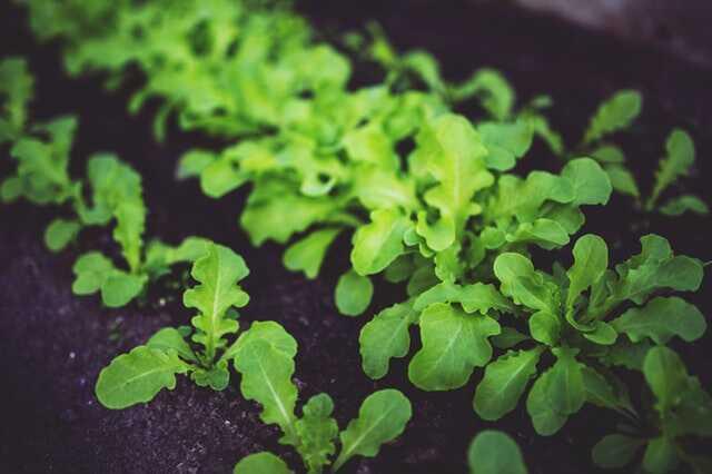 agro-ecologie