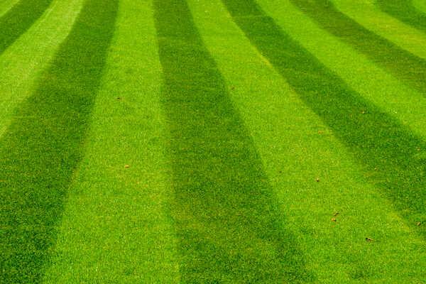 onderhoud-gras