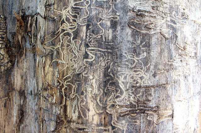 termietenplaag